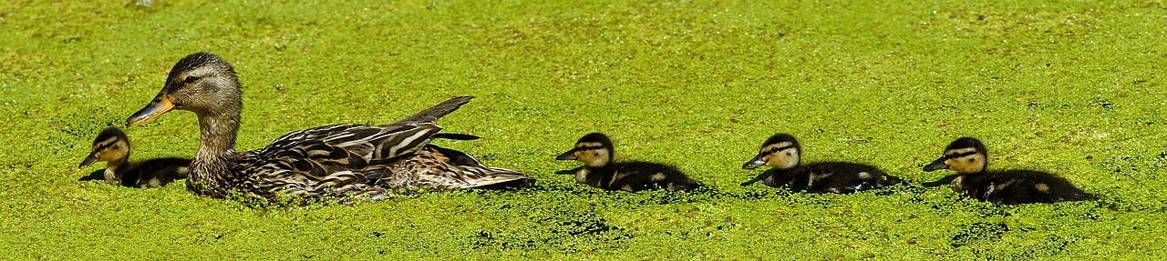 Get Your Ducks In A Row: 7 Renovation Tips For Small Business Owners