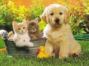 Promoting your Veterinary Clinic