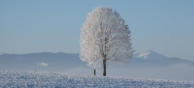 winter-198447_640-1